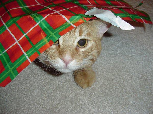 Figgy-Christmas 04.jpg