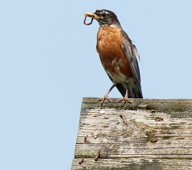 Early Bird.jpg