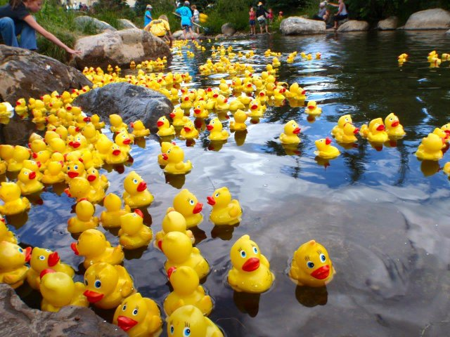 Great Duck Race.jpg