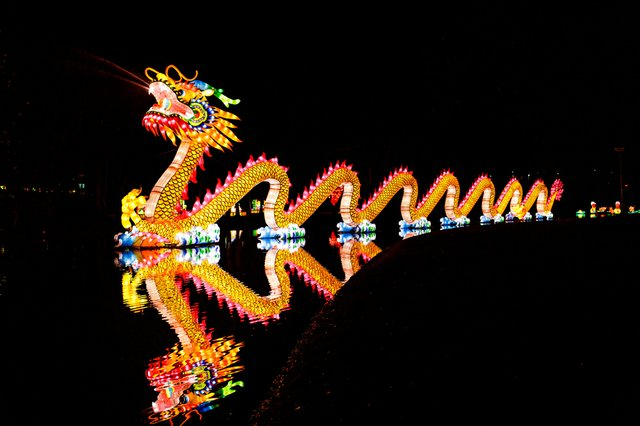 Chinese Lantern Dragon.jpg