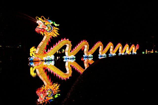 Chinese Lantern Dragon.jpg