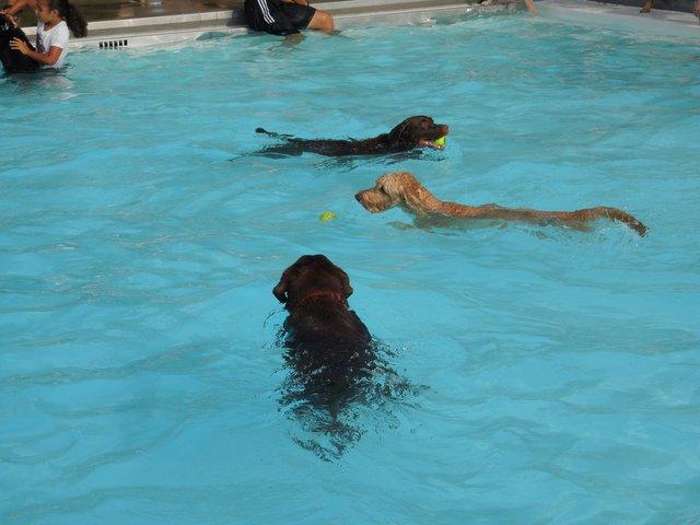 2014 Dog Splash_CourtesyofCityofPickerington.new.jpg