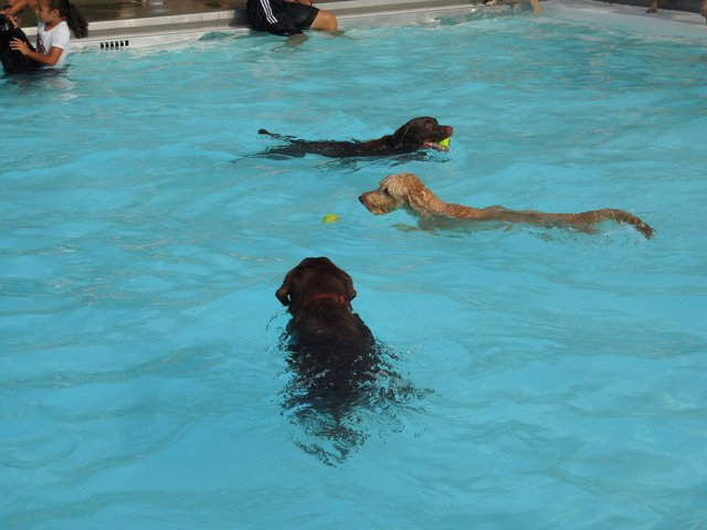 2014 Dog Splash_CourtesyofCityofPickerington.new.jpg