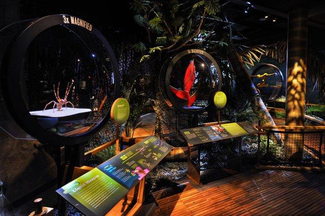 Chocó Rain forest diorama