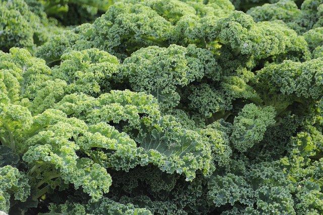 cabbage-flora-food-51372.new.jpg