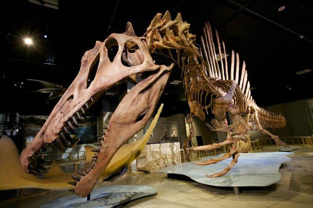 Spinosaurus_credit_MarkThiessen - Copy.jpg