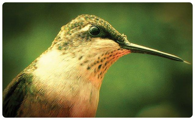 hummbird-2_cmyk - photo by Jenny Fago.jpg