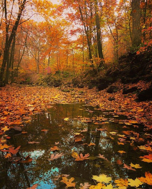 fall 3 Darren Mathys.jpg