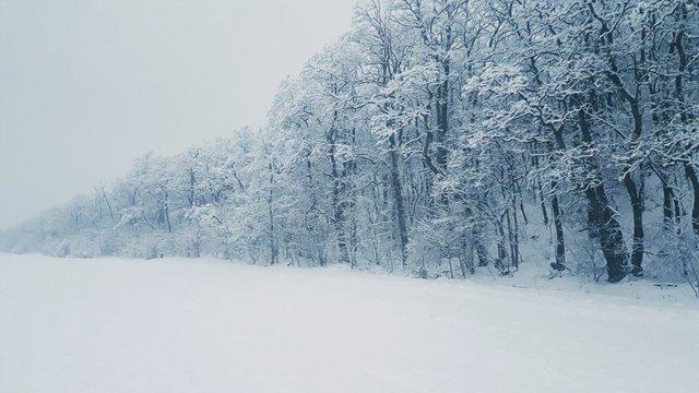 cold-fog-forest-1003124.jpg