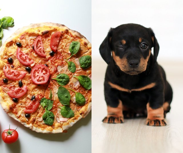 Pizza + Puppies.png