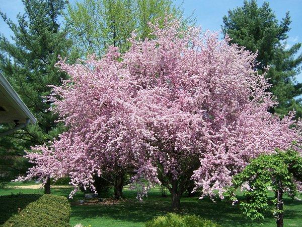 mytree.jpg