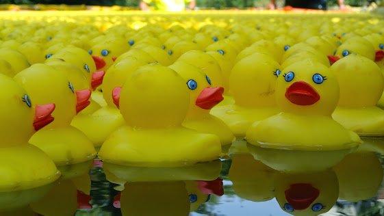 ducks in water.jpg