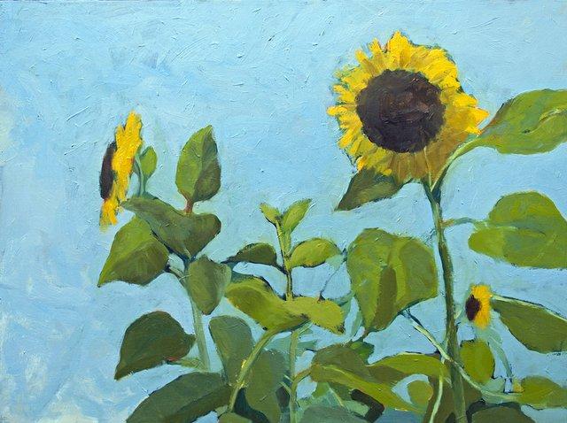 Highline Holly Leonard, Sunflowers.jpg