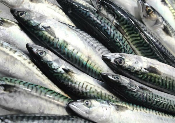 mackerel-fish.jpg