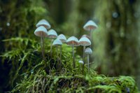 white-fungi-1643416.jpg