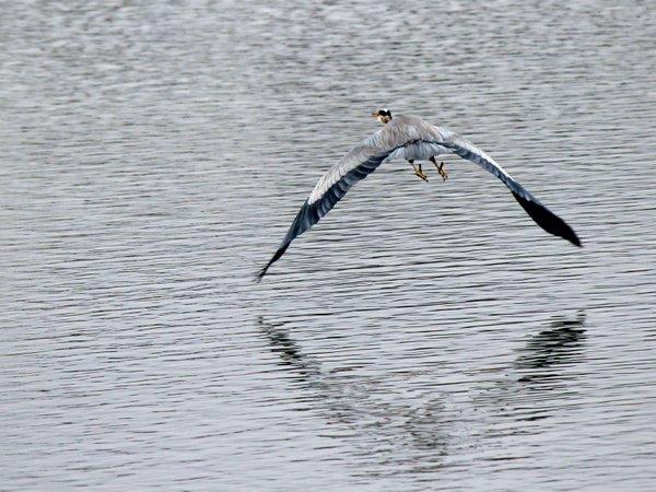 Fox Glen West Pond.jpg