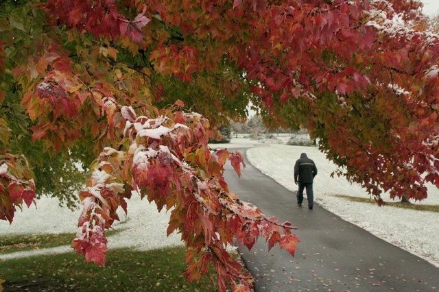 Early Snowfall at Indian Run Meadows Park, Don Robinson