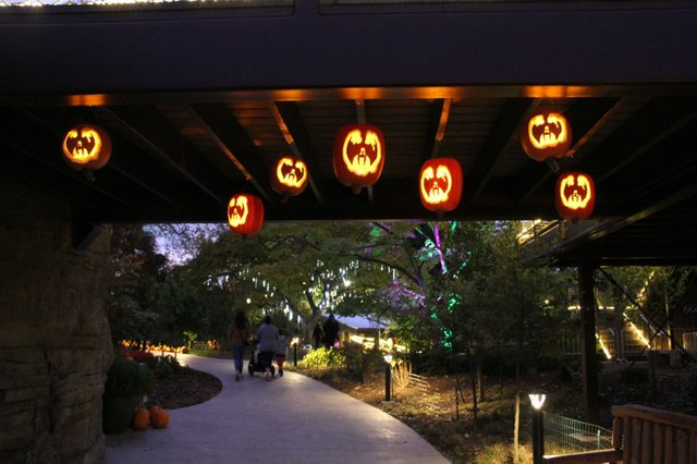 Pumpkins Aglow.jpg