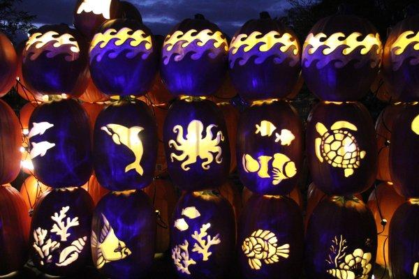 Pumpkins Aglow 3.jpg