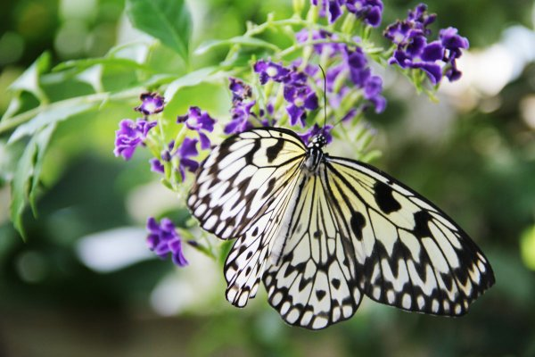 Blooms and Butterflies.jpg