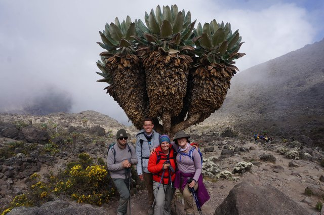 hikingfounders-senecio-tree.jpg