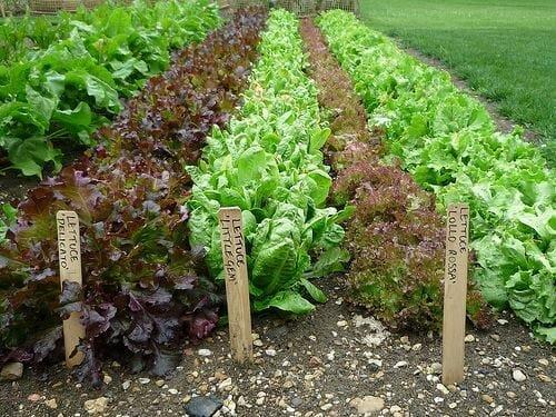 foodCommunity Garden Photo HNA STORY.jpg