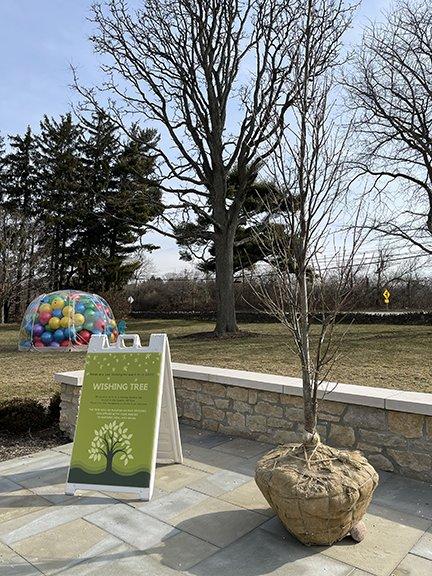 Dublin Arts Council Wishing Tree.png