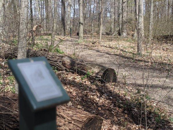 parksSickward Woods.jpg