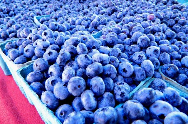 blueberried alive.jpg