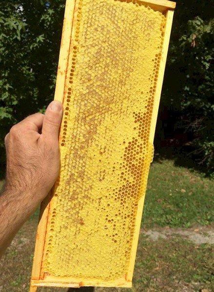 Combs Bee Farm.jpg