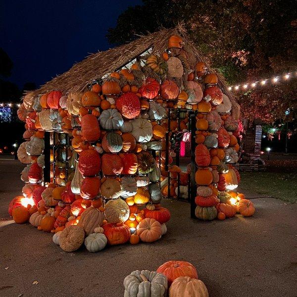 Pumpkins Aglow.jpeg