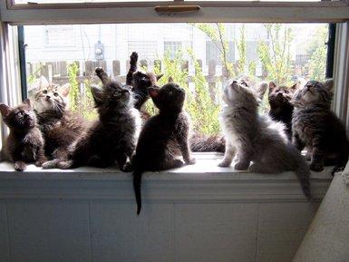 13 kittens.jpg