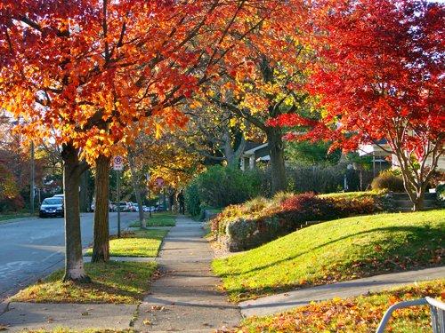 Autumn on 2nd Avenue JPG.jpg