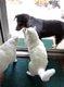 2CATS AND A DOG   PATRICIA HUNTER.jpg