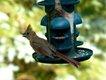 BIRD  PATRICIA HUNTER.jpg