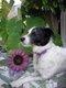 Jill Ann Ladrick4.jpg
