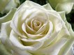 Jill Ann Ladrick5.jpg
