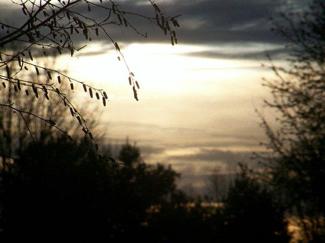 MORNING_SUN__PATRICIA_HUNTER.jpg