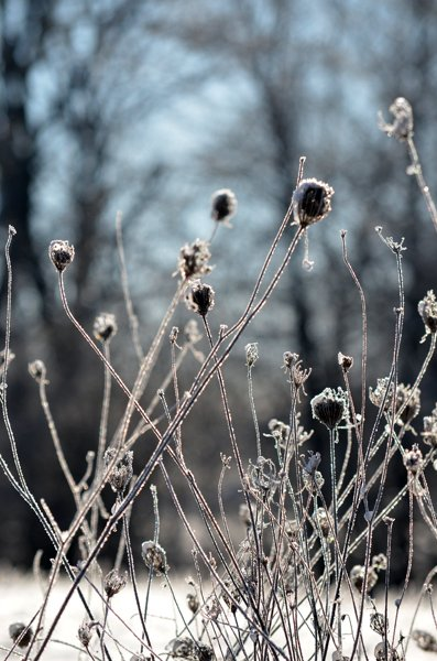 Winter Morning Cheryl Bach.jpg