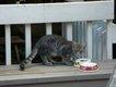 Gladys' Porch.jpg