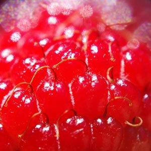 visualsberry.jpg