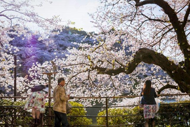 Tokyo - Aoyama.jpg