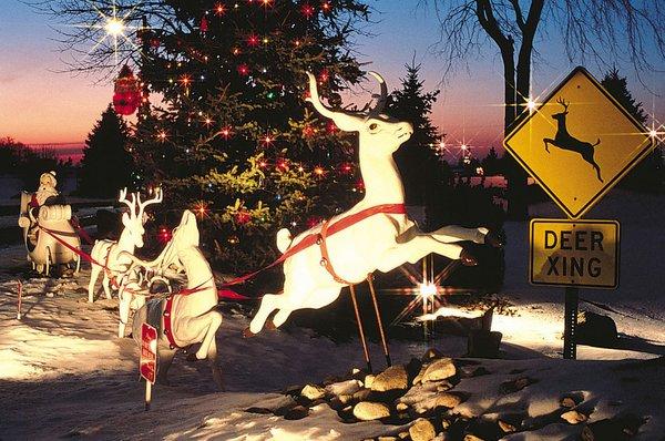 reindeer outside.jpg